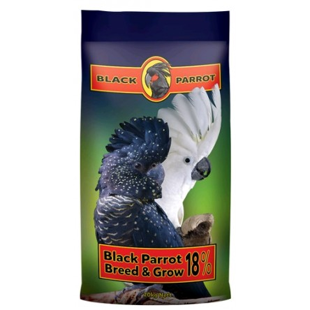 Black Parrot breed grow